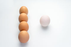 Egg line on white background. Eggs line on white background Stock Photo