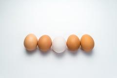 Egg line on white background. Eggs line on white background Royalty Free Stock Photos