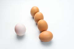 Egg line on white background. Eggs line on white background Royalty Free Stock Photography