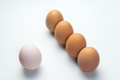 Egg line on white background. Eggs line on white background Royalty Free Stock Photo