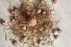Egg nel nido del fieno sul vecchio fondo di legno della tavola Fotografie Stock Libere da Diritti