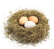 Egg in nest Stock Photos