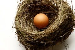 Egg in nest Stock Photo