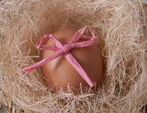 Egg in a nest. With Easter bow Royalty Free Stock Image