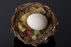 Egg in nest Royalty Free Stock Images