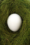 Egg in a nest. Egg lays in a nest Stock Photo