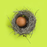 Egg in a nest. Easter egg in a real bird's nest over green background Stock Photos