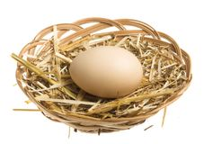 Egg in nest stock image