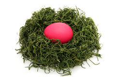 Egg in a nest Royalty Free Stock Photos