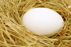 Egg in the nest. Royalty Free Stock Photography