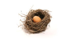 Egg in the nest Stock Images