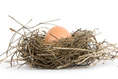 Egg in nest. Isolated on white background Stock Photography