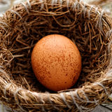 Egg in nest. Brown egg in a nest, close-up royalty free stock images
