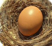 Egg nest Royalty Free Stock Image