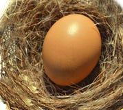 Egg nest Royalty Free Stock Image