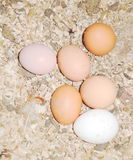Egg in a nest Stock Photography