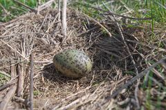 Egg in a nest close up Stock Photo