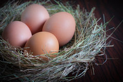 Egg in nest Royalty Free Stock Image