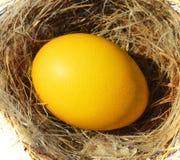 Egg nest Stock Photos