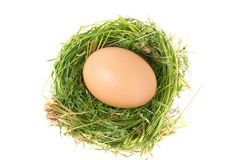 Egg in the nest of grass isolated on white background Stock Image