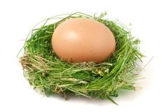 Egg in the nest of green grass isolated on white background Royalty Free Stock Images