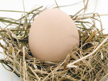 The egg is in nest of hey Royalty Free Stock Images