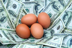 Egg nest Royalty Free Stock Images
