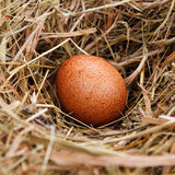 Egg in the nest Stock Photo