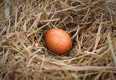 Egg in the nest Royalty Free Stock Photos