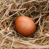 Egg in the nest Royalty Free Stock Photo
