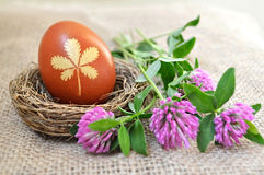 Egg in the nest and red clover flowers Stock Image
