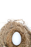 Egg in a Nest Royalty Free Stock Images
