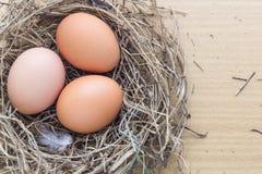 Egg in nest Stock Photos