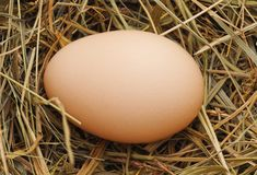 Egg in a nest. On a white background stock photography