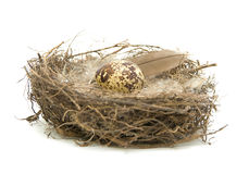 Egg in a nest on a white background Royalty Free Stock Photography