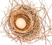 Egg in a nest. White background royalty free stock photography