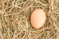 Egg nestled in straw Royalty Free Stock Images