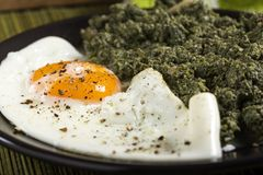 Egg with nettle and spinach stew on plate Stock Images