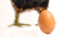 Egg no branco e em uma galinha no fundo imagens de stock