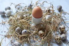 Egg no ninho do feno no fundo de madeira velho da tabela fotografia de stock royalty free