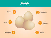 Egg nutrition facts, egg with information, eggs vector Stock Image