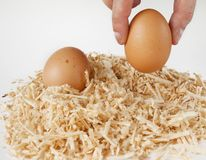 Egg Offering (choice) in nest with human hand Royalty Free Stock Photos