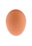 An Egg. One single chicken egg on white background stock photo