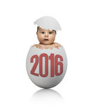 Egg. One white egg with baby, on grey background, hatching 2016 New Year concept Stock Photo