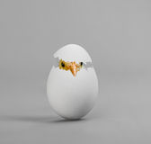 Egg. One white egg with chicken, on grey background, hatching Stock Photography