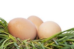 Egg Over Green Grass Royalty Free Stock Image