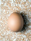 Egg over shell crumbs Stock Photo