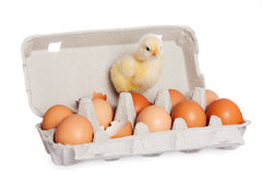 Egg package with cute baby chick Royalty Free Stock Image