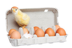 Egg package with cute chick Stock Photography