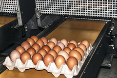 Egg packaging line 1 Stock Images